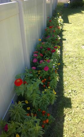 plants-sale1-500