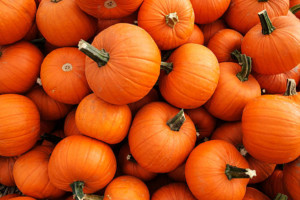 Pumpkin Patch- delivery date! @ American Legion Hall | Huntington | New York | United States